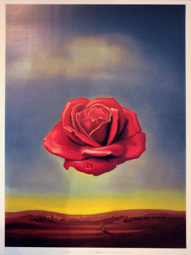 Salvador dali la rosa meditativa 1958 riproduzione for Riproduzione rose