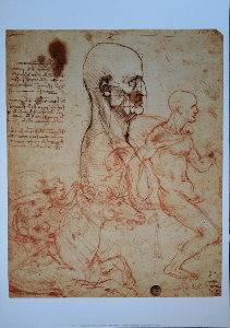 Leonardo Da Vinci poster, Study of the human physiognomy